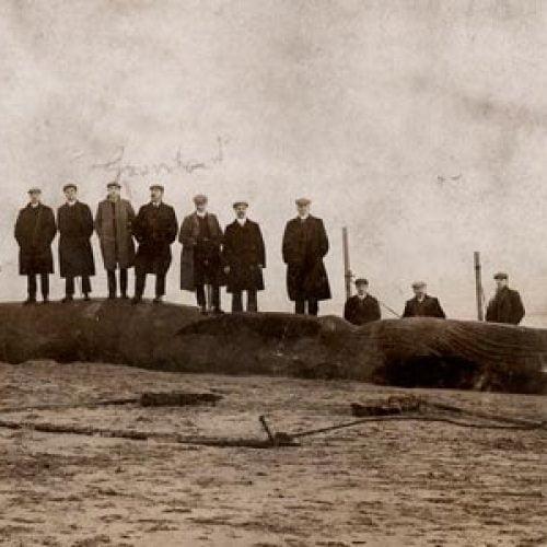 whale-580