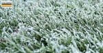 frozen-pitch