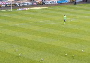 The seagulls take up a defensive line during the game with Exeter City.