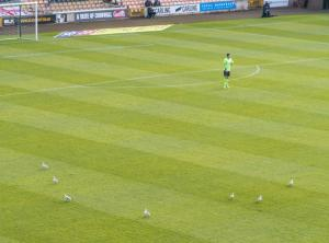 It seemed like even the pigeons were lining up in formation at Vale Park